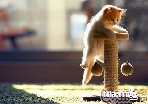 教育猫咪要斗智斗勇