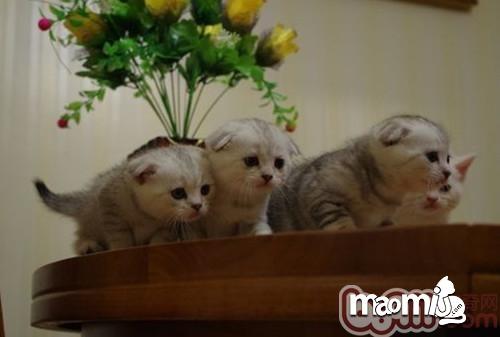 猫咪夜游的习惯能纠正吗